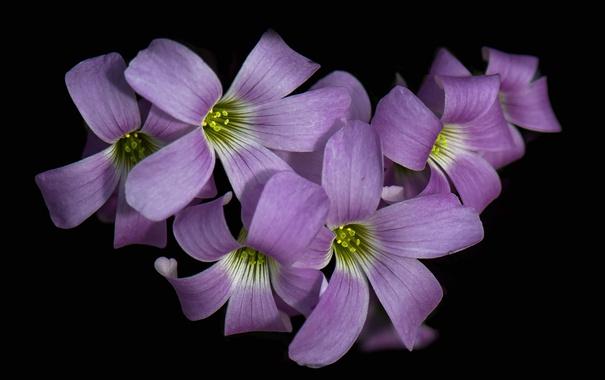 Фото обои цветы, фон, краски, лепестки, соцветие