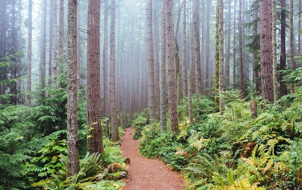 Фото обои туман, деревья, кусты, Вашингтон, тропинка, Issaquah, лес