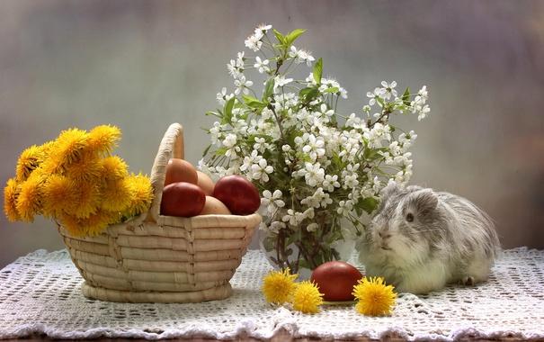 Фото обои вишня, яйца, морская свинка, одуванчики, крашенки