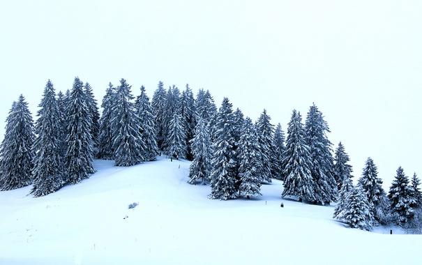 Фото обои зима, снег, деревья, ели, холм
