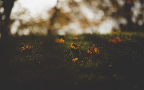 Фото обои осень, трава, листья
