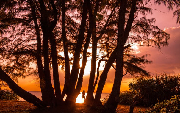 Фото обои девушка, деревья, закат, берег, вечер, силуэт, зарево