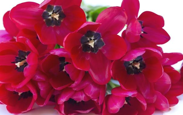 Фото обои макро, лепестки, тюльпаны