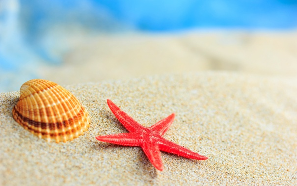 Фото обои песок, море, пляж, берег, ракушки, summer, beach