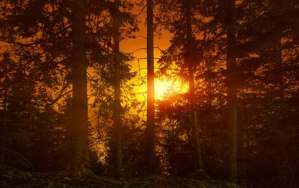 Фото обои лес, деревья, закат, зарево
