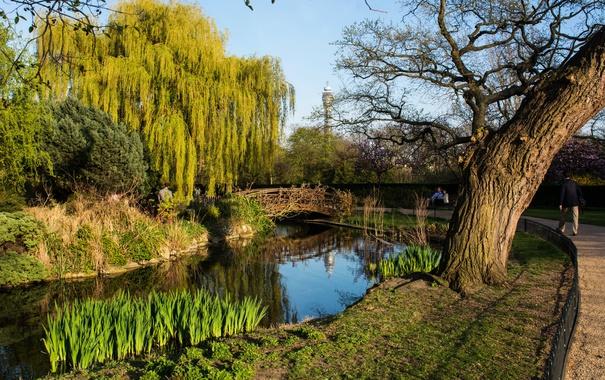 Фото обои трава, деревья, пруд, парк, Англия, Лондон, дорожка