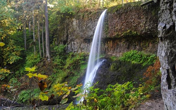 Фото обои осень, лес, скала, парк, водопад, США, Silver Falls State Park