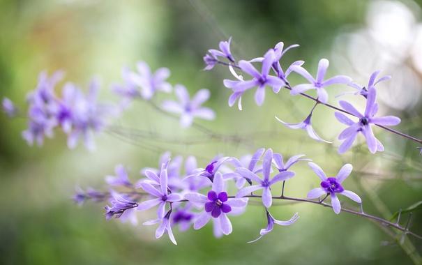 Фото обои макро, лепестки, соцветие, петрея