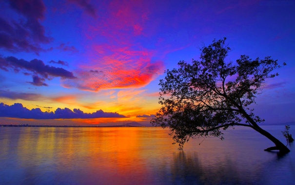 Фото обои небо, озеро, дерево, вечер, зарево, обьлака