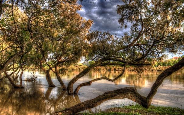 Фото обои осень, деревья, река, HDR, Испания, в воде, Zaragoza