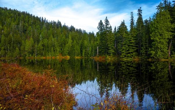 Фото обои осень, лес, вода, деревья, озеро, отражение, США