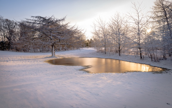 Фото обои зима, снег, утро