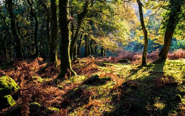 Фото обои осень, лес, трава, деревья, мох, солнечно