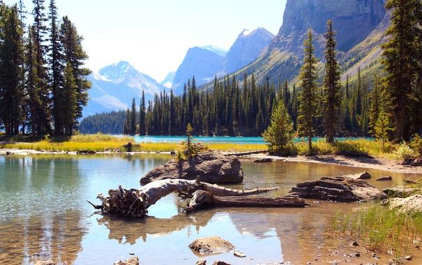 Фото обои лес, деревья, горы, озеро, камни, скалы, Alberta