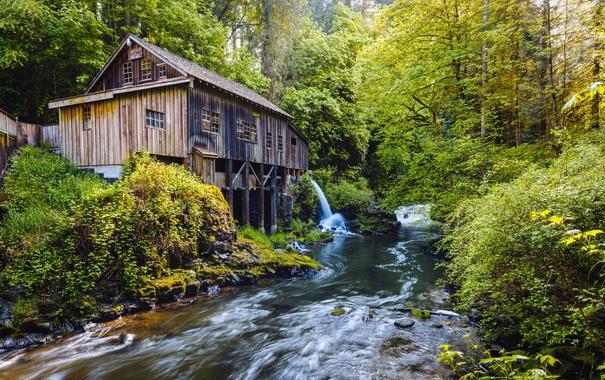 Фото обои лес, деревья, ручей, водопад, мельница, Вашингтон, США