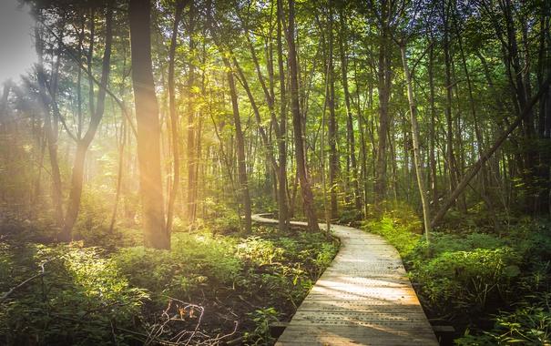 Фото обои лес, деревья, дорожка
