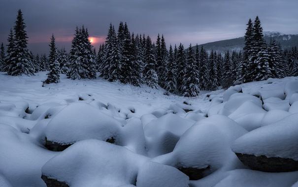 Фото обои зима, снег, деревья