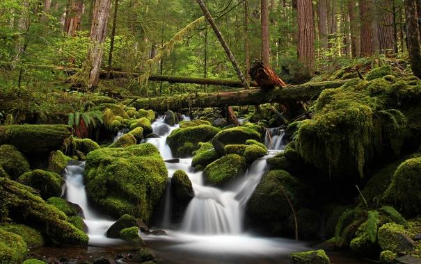 Фото обои лес, вода, деревья, зеленый, река, камни, мох