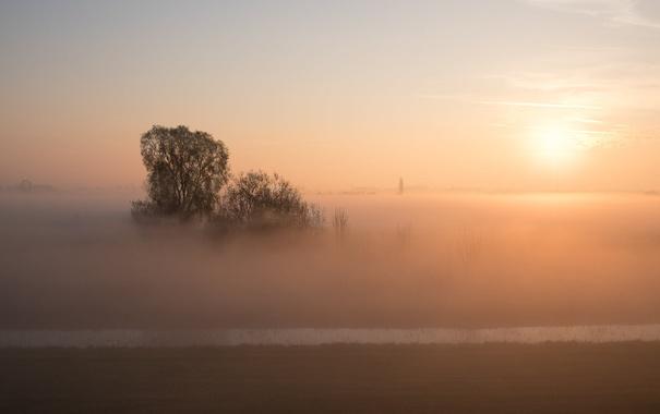 Фото обои поле, туман, утро