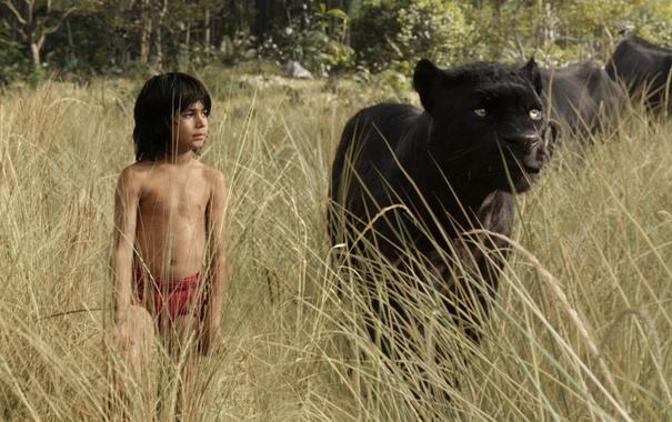 Фото обои трава, мальчик, пантера, прогулка, Багира, Маугли, The Jungle Book