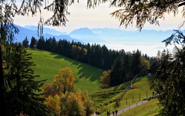 Фото обои осень, лес, солнце, деревья, горы, ветки, туман