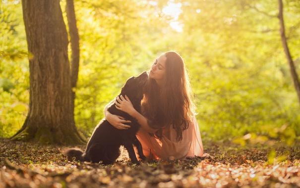 Фото обои девушка, свет, собака