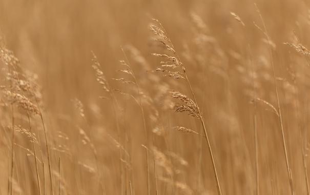 Фото обои трава, макро, природа, фон
