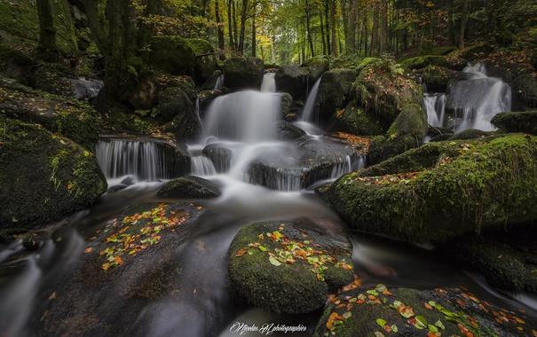 Фото обои лес, природа, река, листва, осень.камни