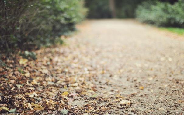 Фото обои дорога, осень, листья
