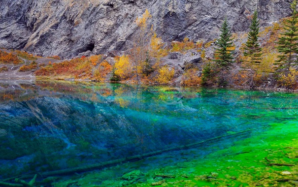Фото обои деревья, водоросли, озеро, скалы, Канада, Альберта, Grassi Lake