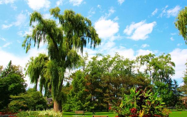 Фото обои зелень, небо, трава, облака, деревья, цветы, парк