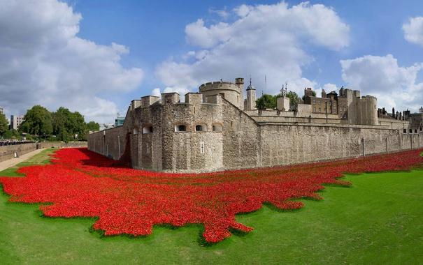 Фото обои Англия, Лондон, крепость, Тауэр, арт-инсталляция, керамические маки, 100-летие начала Первой мировой войны