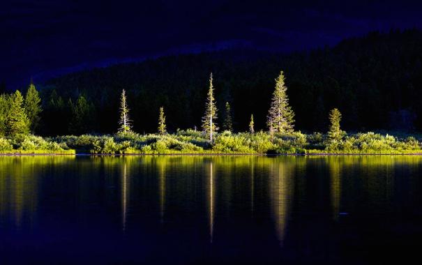 Фото обои деревья, пейзаж, озеро, Монтана, США, Glacier National Park, Swiftcurrent Lake