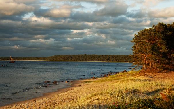Фото обои тучи, деревья, берег, песок, Lohusalu, лес, Эстония