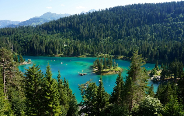 Фото обои лес, деревья, горы, озеро, Швейцария, Lake Maggiore, Ticino