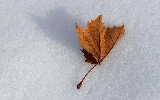 Фото обои снег, природа, лист