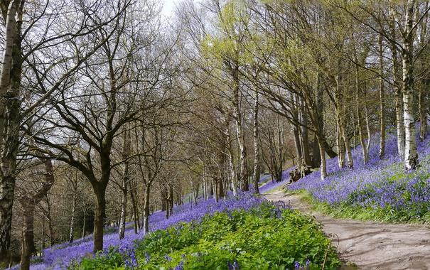 Фото обои дорога, лес, цветы