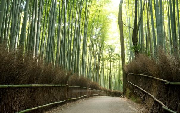 Фото обои light, road, trees, nature, bamboo, effects