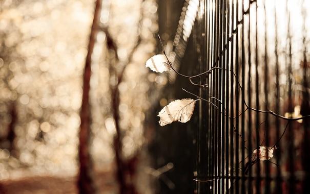 Фото обои забор, фон, листья