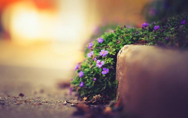 Фото обои цветы, природа, улица