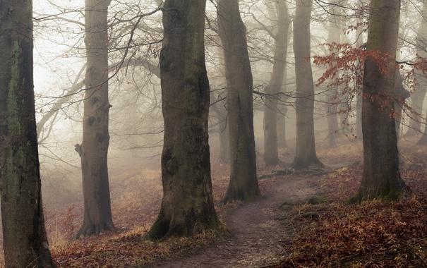 Фото обои деревья, природа, тропинка