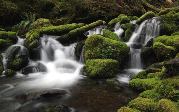 Фото обои лес, вода, река, камни, мох