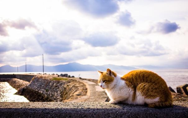 Фото обои кошка, лето, небо, кот, фон