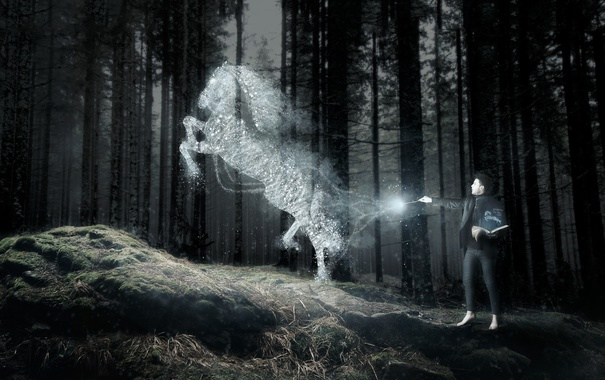 Фото обои лес, конь, человек