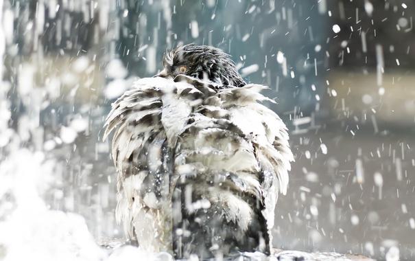 Фото обои фон, дождь, птица