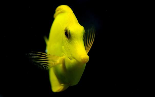 Фото обои вода, рыба, макро