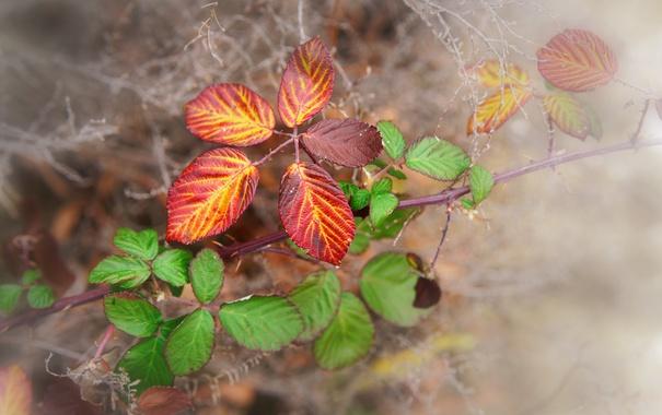 Фото обои осень, листья, макро, природа, веточки