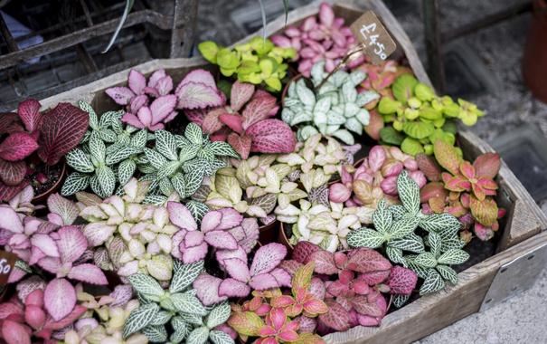 Фото обои растения, лепестки, много, разные