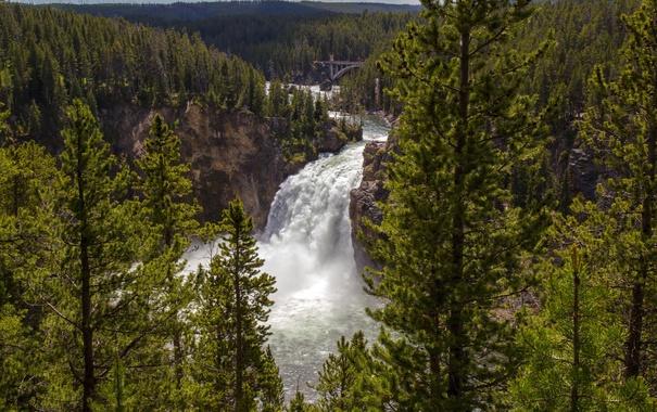 Фото обои лес, деревья, мост, река, камни, скалы, водопад