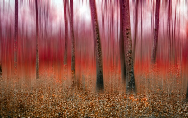 Фото обои лес, природа, фон